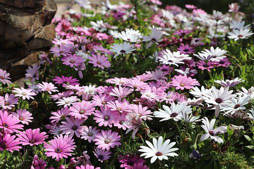 Flower, Nature, Plant, Petal, Garden, Flowering, Summer