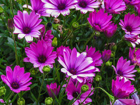 Flower, Nature, Plant, Summer, Garden, Leaf, Color