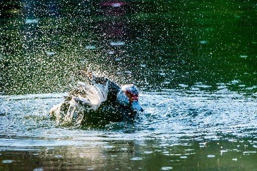 Water, Nature, Wet, Swimming, Splash, River, Outdoors
