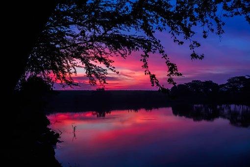 Twilight, The Tree