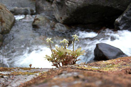 Nature, Stone Leaves, Wildflower, Valley, Mountain