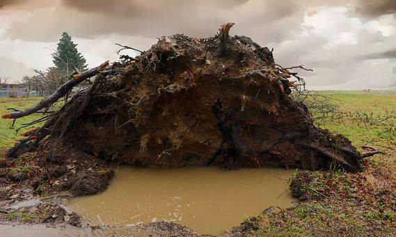Tree, Uprooted, Storm, Roots, Rain, Earth, Wind, Nature