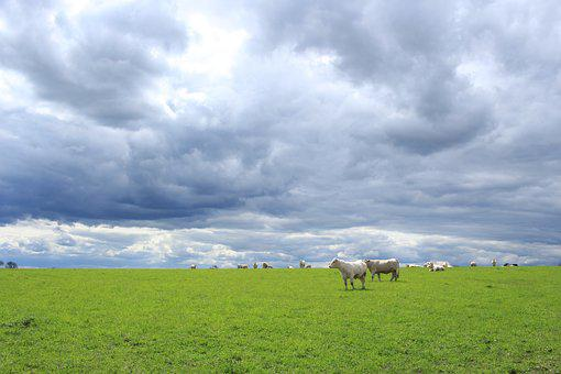 Lawn, Nature, Agro-industry, Field, Sky, France