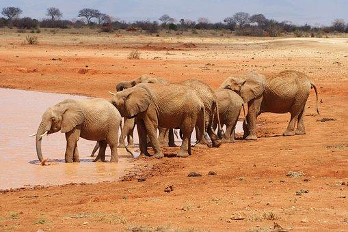 Mammal, Elephant, Animal World, Campaign, Animal
