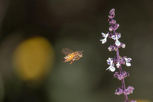 Nature, Flower, Flora, Outdoors, Insect, Bee