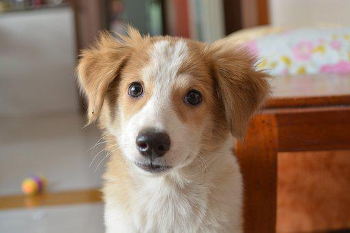 Dog, Pet, Animal, Domestic, Cute, Puppy, Adorable