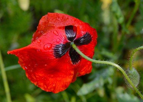 Flower, Nature, Plant, Garden, Leaf, Summer, Close