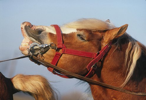 On Heat, Horse, Horny Animal, Mammal, Animal, Cavalry