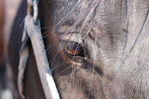 Animal, Nature, Mammal, Horse, Eye, Reiterhof