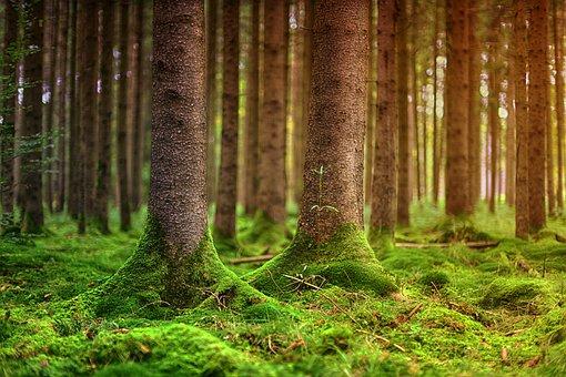 Forest, Nature, Moss, Tree, Leaf, Landscape, Green