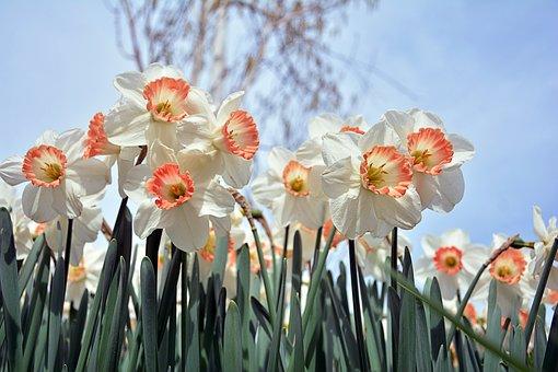 Nature, Plant, Flower, Summer, Live, Color