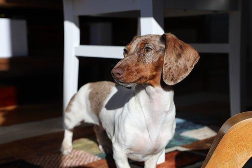 Dog, Domestic, Mammal, Sit, Portrait, Cute, Pet