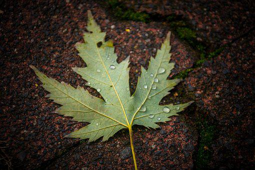 Leaf, Outdoors, Nature, Flora, Fall