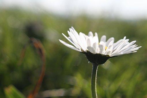 Flower, Nature, Plant, Summer, Garden, Field, Grass