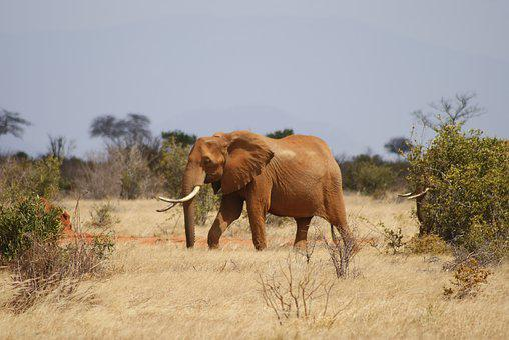 Mammal, Animal, Animal World, Grass, Nature, Elephant