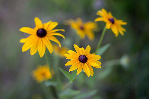 Flower, Flora, Nature, Summer, Floral, Garden, Outdoors