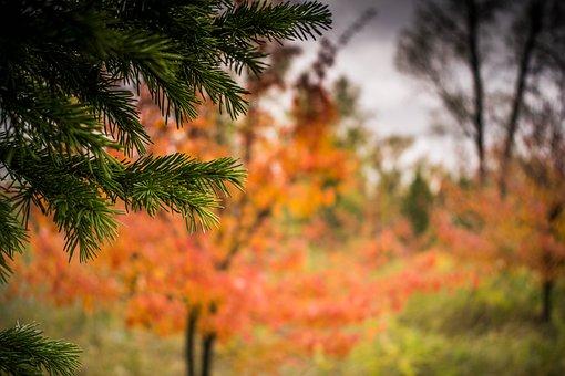 Tree, Nature, Outdoors, Season, Sheet, Autumn