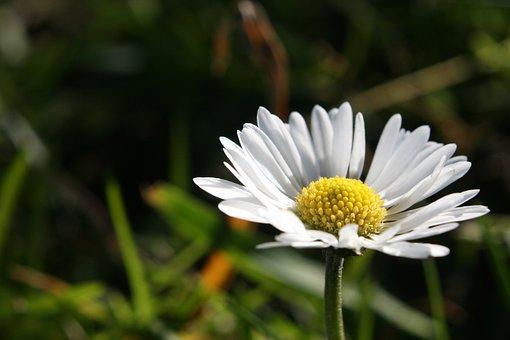 Nature, Plant, Flower, Summer, Leaf, Season, Garden