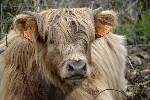Mammal, Animal, Nature, Portrait, Cute, Head, Outdoor