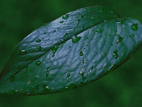 Raindrops, Leaf, Rain, Nature, Dew, Flora, Green