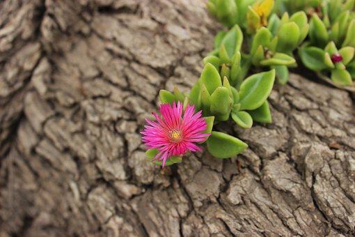 Nature, Plant, Flower, Approach, Leaf, Summer, Garden