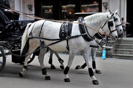 Portable, Transport, The Horse, Horse, Street, Travel