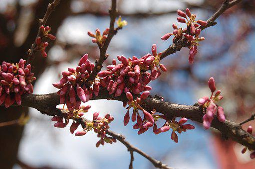 Tree, Branch, Flower, Nature, Gems, Spring, Bloom, Buds