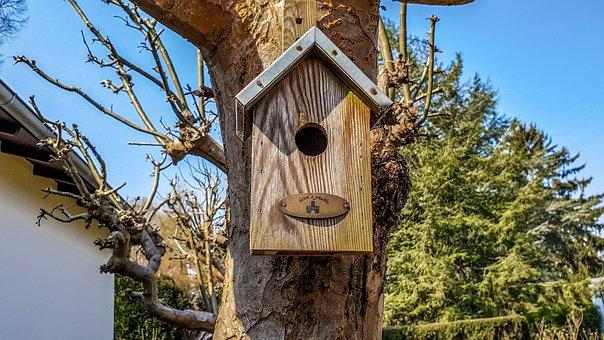 Tree, Bird Feeder, Wood, Nature