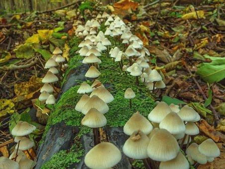 Mushroom, Autumn, Wood, Nature, Forest, Moss