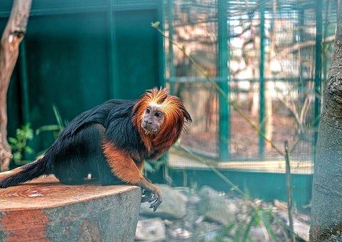Animal, Nature, Zoo, Monkey, äffchen