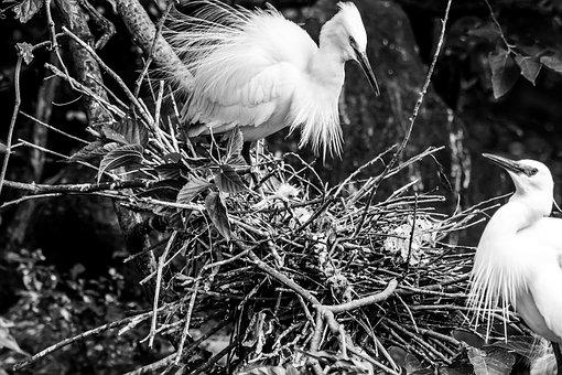 Bird, Wildlife, Feather, Nature, Animal, Egret, Beak