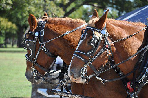 Harness, Horse, Cart, Mammal, Wagon, Animal, Carriage