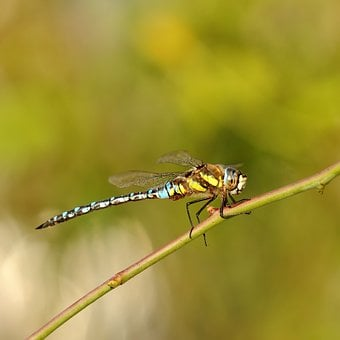 Insect, Nature, Dragonfly, Animal World, Animal, Pond