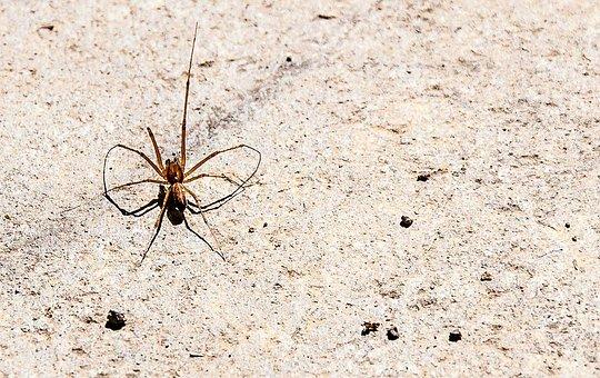 Spider, Nature, Arachnid, Insect