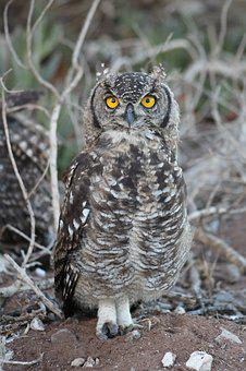 Nature, Wildlife, Bird, Animal, Outdoors, Owl