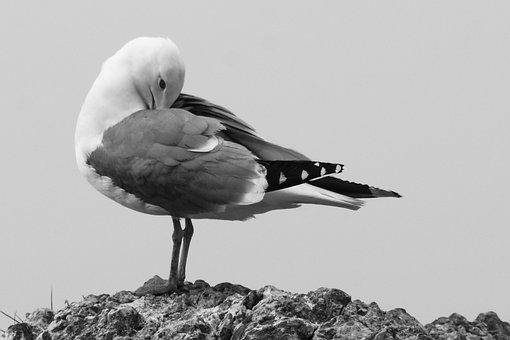 Bird, Seagull, Nature