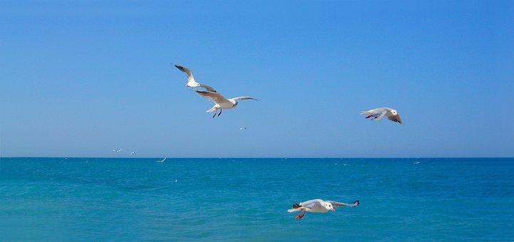 Waters, Nature, Sky, Seagull, Bird, Freedom, Sea
