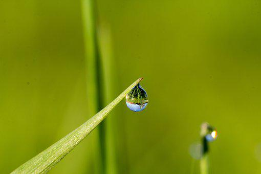 Leaf, Nature, Dew, Pearl, Growth, Blade Of Grass