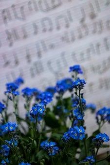 Flower, Nature, Plant, Summer, Color, Garden, Close