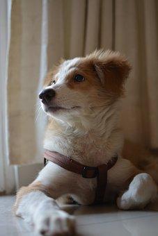 Dog, Cute, Pet, Canine, Puppy, Mammal, Domestic, Animal