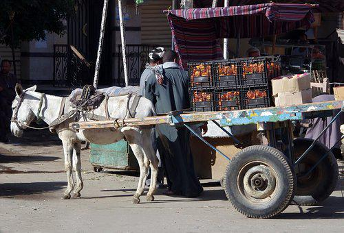Egypt, Aswan, Van, Moke, Drawn, Cart, Transport