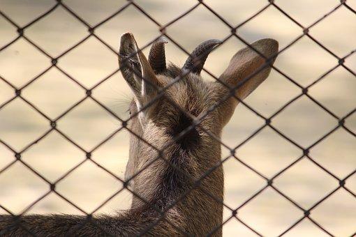 Deer, Fence, Cage, Enclosure, Animal, Nature, Desktop