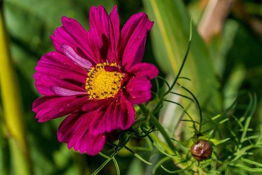 Nature, Plant, Flower, Summer, Garden, Leaf, Petal