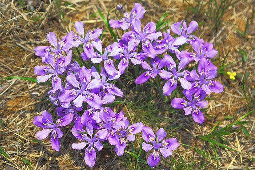 Nature, Flowers, Plants, Outdoors, Grass, Wildflower