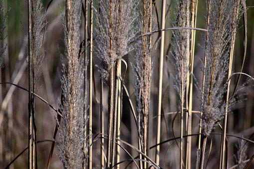 Weeds, Grass, Wild, Dry, Growth