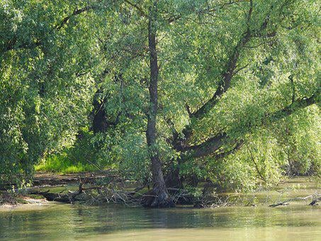 Riparian Zone, Danube Delta, Romania, Wetlands, Jungle