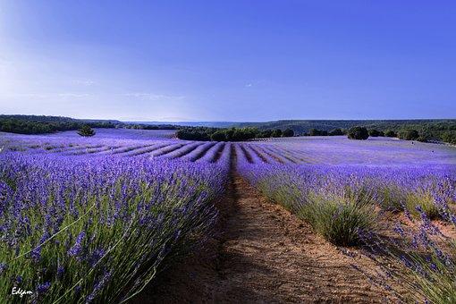 Nature, Landscape, Open Air, Flower