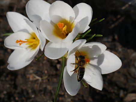 Nature, Flora, Flowers, Season, Color, Beautiful, Macro