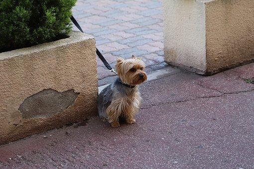 Dog, Cute, Mammal, Canidae, Animals, Small, Pet, Puppy