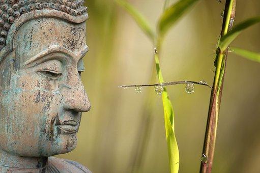 Wellness, Reed, Relaxation, Meditation, Drip